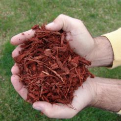 Red Mulch In Hand